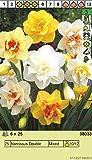 """Narcissus - Narzisse"""" Gefüllte Prachtmischung"""" (10 Blumenzwiebeln)"""