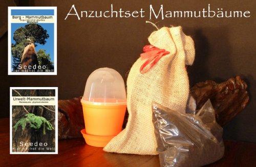 Seedeo kit de culture de mammutbäume rond