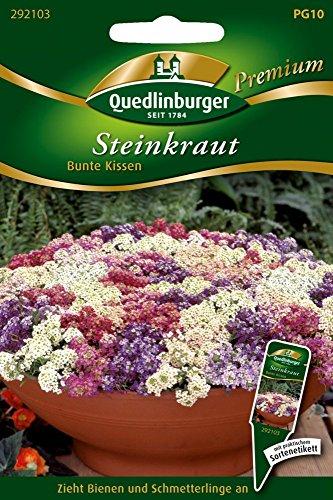 Steinkraut bunte Kissen von Quedlinburger Saatgut