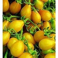 GEOPONICS Amarillo del tomate pera gran herencia Jardín VegableSeeds