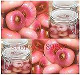 Pinkdose 100 pc/piante di cipolla borsa cinese NO-OGM vegetale per fioriere vaso di fiori veloce crescere la pelle rosa deliziosa