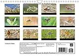 Image de Couleurs d'ailes : Papillons diurnes. Calendrier mural A4 horizontal 2016