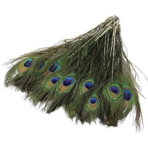 es natürliches Pfau Schwanz Federn über 25,4–30,5cm für Heimwerker Home Dekoration (Pfau Kostüm Zubehör)