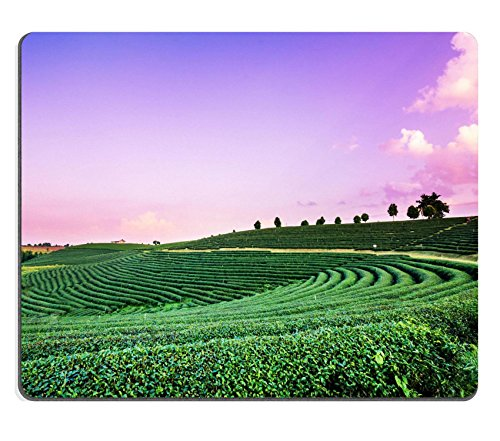 Mousepads piantagione di tè paesaggio al tramonto Chiangrai Tailandia a Image ID 39276686 by Liili Customized Mousepads Stain Resistance Collector kit Kitchen Table top Desk drink Customized Stain Resistance Collector kit Kitchen Table top Desk