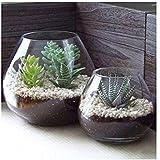Xiustore - Lote de 2 jarrones redondos de cristal decorativos para velas, terrarios y plantas artificiales