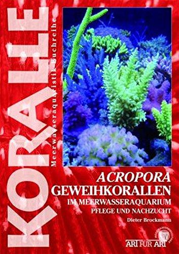 Acropora-Geweihkorallen im Meerwasseraquarium: Pflege und Vermehrung