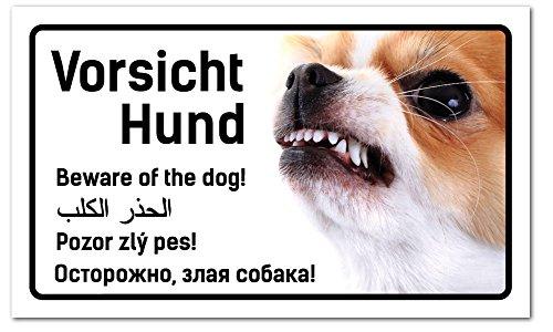 Vorsicht Hund Schild 5-sprachig 25x15cm Chihuahua