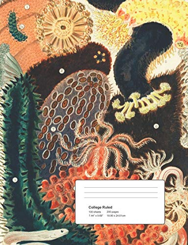 Composition Notebook: College Ruled Blank Lined Cute Notebooks Great Barrier Reef for Girls Teens Kids School Writing Notes Journal (7.5 x 9.25 in) -