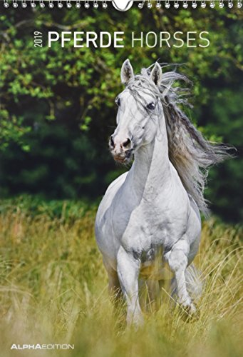 Pferde 2019 - Horses - Bildkalender (24 x 34) - Tierkalender