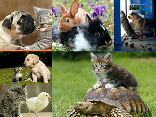 Postkarten-Set Tiere: