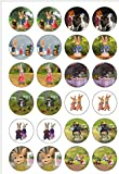 24 Precut Peter Rabbit Edible Wafer Paper Cake Toppers