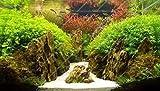 Pinkdose 500 pc/Sacchetto Piante Piante d'acquario Pesce Acquatico Erba Acqua a Caso Indoor Planta/Plante abbellire Piante Esotiche vegetali Mista: Multi-Colored