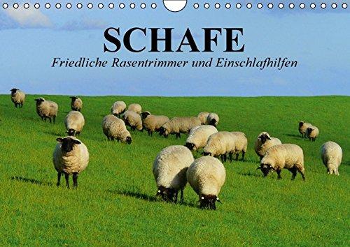 Preisvergleich Produktbild Schafe. Friedliche Rasentrimmer und Einschlafhilfen (Wandkalender 2016 DIN A4 quer): Nützliche Wollknäuel und Bereicherung der Landschaften (Geburtstagskalender, 14 Seiten) (CALVENDO Tiere)