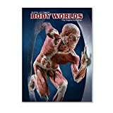 Exhibition Catalog BODY WORLDS (English)