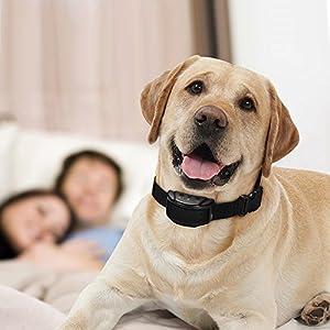 doglina automatique sans cruauté Anti aboiements pour chien formation collier + sans Sifflet de dressage pour chien et chien Trainer Clicker