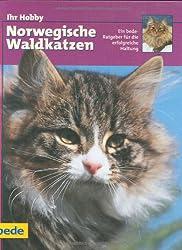 Ihr Hobby Norwegische Waldkatzen.