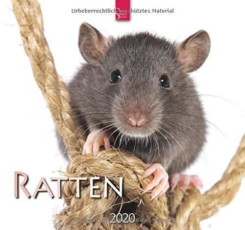 Ratten: Original Stürtz-Kalender 2020 - Mittelformat-Kalender 33 x 31 cm