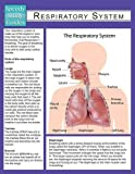 A guide about the respiratory system is a great benefit for teachers in the classroom setting. This reference guide can be a great resource for teaching the importance of the respiratory system as well as the many parts of it. The guide is also a gre...