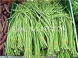 Immobilier Offre Spéciale Plantes d'été Blooming Vierge Très Facile des exclus Plantes Sourcils Haricots Haricots Légumes en Pot 10Pcs: 13...