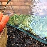 Pack of 3 - Large - 1.5m x 0.6m x 0.6m High - Garden Pop-Up UPVC Mini Greenhouse Poly Cloche Tunnel Bild 4