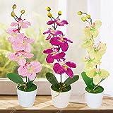 100 PC / bag Seltene Mini-Orchidee Phalaenopsis-Orchideen-Samen Indoor Miniatur-Bonsai Garden Blumensamen Orchideentopf Hausgarten Pflanze Rot