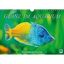 Glanz im Aquarium: Süßwasserfische (Wandkalender 2018 DIN A4 quer): Aquarium: Prachtregenbogenfisch, Marmorskalar & Co. (Monatskalender, 14 Seiten ) ... [Kalender] [Apr 01, 2017] CALVENDO, k.A.