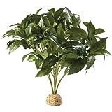 Hagen Exo Terra Rainforest Plant Laurel Bush