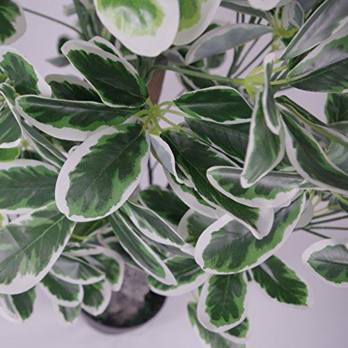 Blatt-Entwurf UK 100cm Artificial Regenschirm Baum Ficus Zimmerpflanze – Extra Large – Topf in Schwarzem Kunststoff-Topf