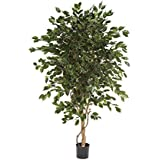 Floral Concept Plants&Trees - Ficus Exotica, 150 x 60 x 60 cm, color verde natural