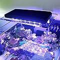 Lumière de Clip Marine SPS LPS de Corail léger de LED for la Lampe futée de WiFi de réservoir de récif de mer d'aquarium Lampes de réservoir de Poisson