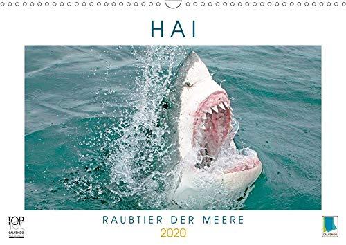 Hai: Raubtier der Meere (Wandkalender 2020 DIN A3 quer)