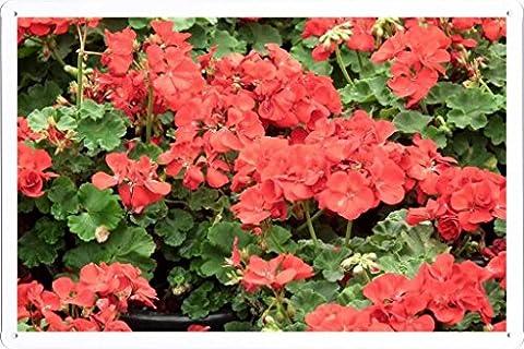 Affiche Métal Poster Tin plaque de signalisation Flower Tin Sign Geranium Flowers Red Pot Herbs Drops 36152 Retro Vintage Décoration murale by hamgaacaan (20x30cm)