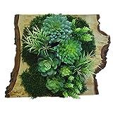 e-flor made man man Künstlicher Vertikaler Garten auf Naturstamm 41 x 45 cm, Bestehend aus Einer Basis aus Musgo konserviert. Hochwertige Materialien, Ideal für die Heimdekoration.
