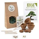 Bonsai Kit incl. eBook GRATUITO - Set con macetas de coco, semillas y tierra - idea de regalo sostenible para los amantes de las plantas