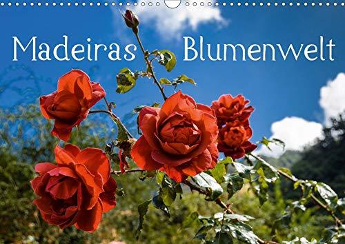 Madeiras Blumenwelt (Wandkalender 2020 DIN A3 quer): Wunderschöne Blüten Madeiras im Herbst (Monatskalender, 14 Seiten ) (CALVENDO Natur)