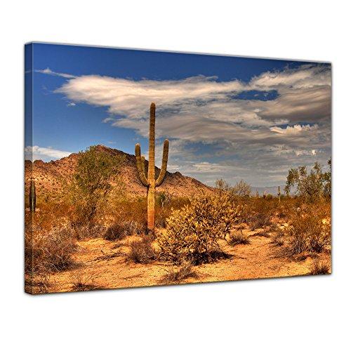 Bilderdepot24 Kunstdruck - Wüste Kaktus - Bild auf Leinwand 80 x 60 cm - Leinwandbilder - Bilder als Leinwanddruck - Wandbild Landschaften - Sonne - Natur - Kaktus in der Prärie
