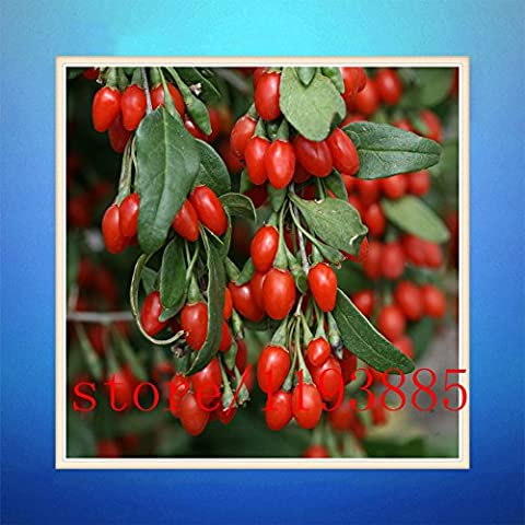 200 semillas VERDADERO Goji Berry, (wolfberry), maquillaje profesional más popular baya heathy, arbusto enano rico en antioxidantes