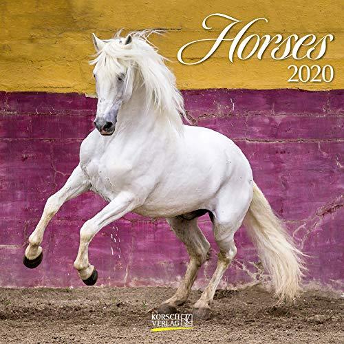 Horses 2020: Broschürenkalender mit Ferienterminen. Pferde und Ponys. 30 x 30 cm