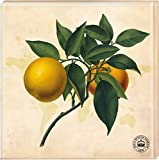 Kew Gardens - Untersetzer Motiv Orange (2er Set)