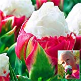 ScoutSeed New Nice Adorable Flower Fragrante Seeds Blooms di esplosione Tulipani C1MY