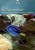 Riffbewohner - Bunte Fische, Anemonen und noch viel mehrAT-Version (Wandkalender 2019 DIN A3 hoch): Tropische Riffe bieten eine große Vielfalt an ... Farben (Planer, 14 Seiten ) (CALVENDO Tiere)
