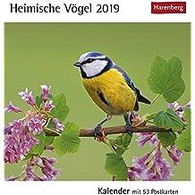 Heimische Vögel - Kalender 2019: Kalender mit 53 Postkarten