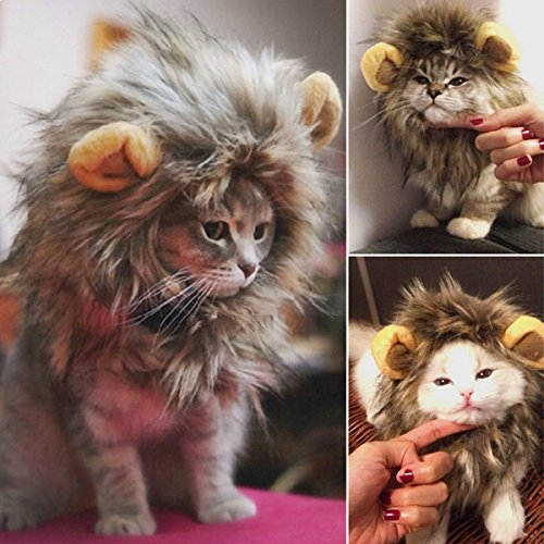 Kostüm Löwe für Katzen und kleine Hunde Kostüm