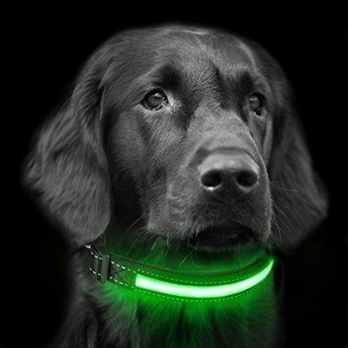 Focuspet Collar LED para Perros, Collar de Collar Luminoso para Perros con LED USB y Collar de Seguridad para Cuello y Collar Ajustable. M38-48cm L48-60cm Verde M