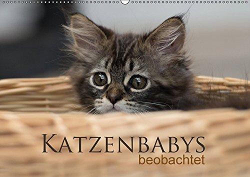 Katzenbabys beobachtet (Wandkalender 2017 DIN A2 quer): Dreizehn zauberhafte Bilder der süßen Katzenbabys. Mit der Kamera beobachtet, machen sie viel ... (Monatskalender, 14 Seiten ) (CALVENDO Tiere)