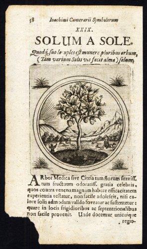 theprintscollector-antique-motif-arbre-a-agrumes-sunshine-proverbe-sibmacher-camerarius-1697