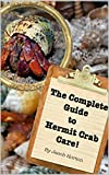 The Complete Guide to Hermit Crab Care!