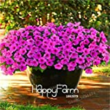 Vista Schlussverkauf! 200 stücke Petunia Seeds Mix Petunia Hybrida samen hängen petunia samen, garten Petunia, bonsai pflanze für hausgarten Bunt