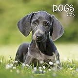 Dogs 2018: Broschürenkalender mit Ferienterminen. Hunde und Welpen. 30 x 30 cm