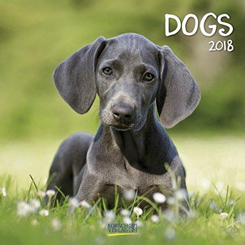 Dogs 2018: Broschürenkalender mit Ferienterminen. Hunde und Welpen. 30 x 30 cm (Welpen-kalender-kleine)